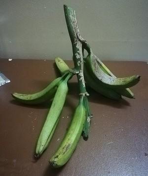 パプアのポテトなバナナ。